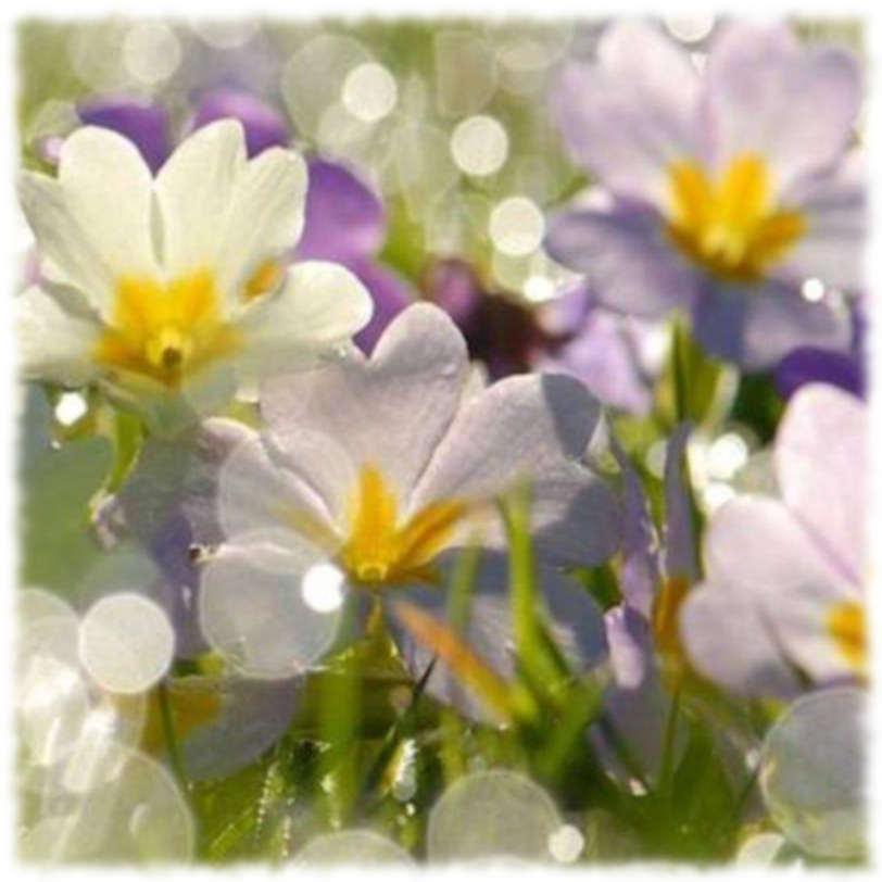 Апрель - цветы