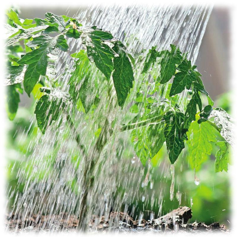 Правильный полив садовых растений