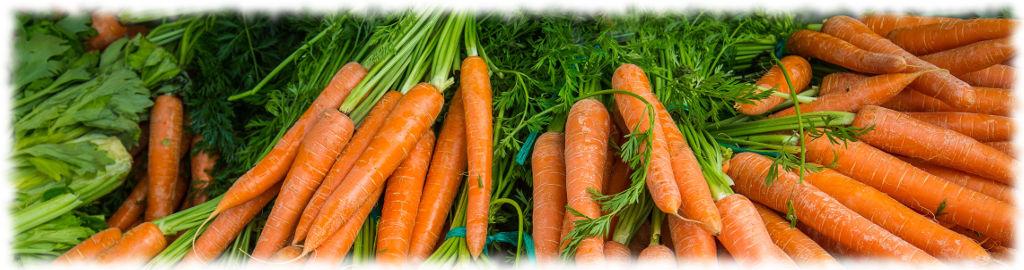 Подмосковная морковь