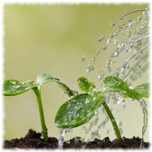 Весенний полив растений