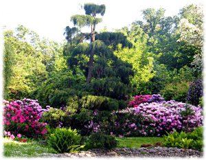 Хвойники в японском саду