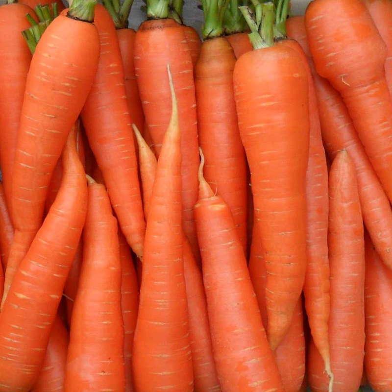 Подвиды моркови