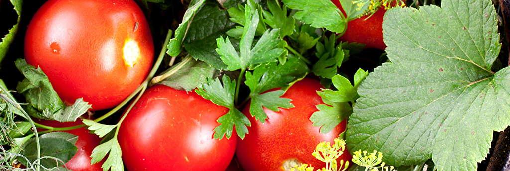 Соленые помидоры в бочках