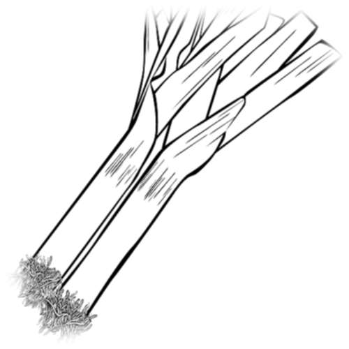 Выращивание лука-порея по старинному