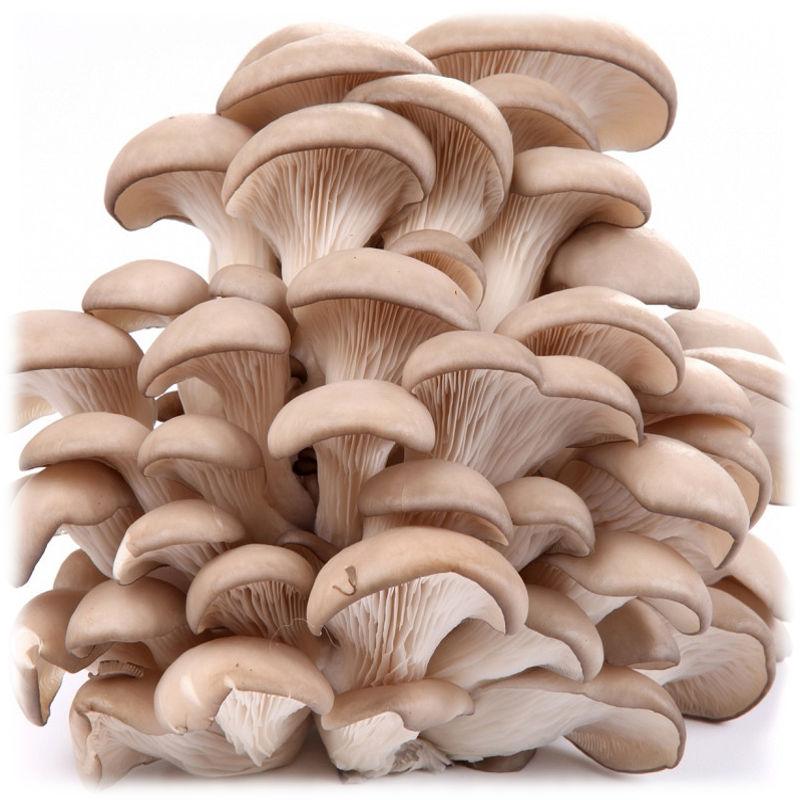Иконка грибы на даче