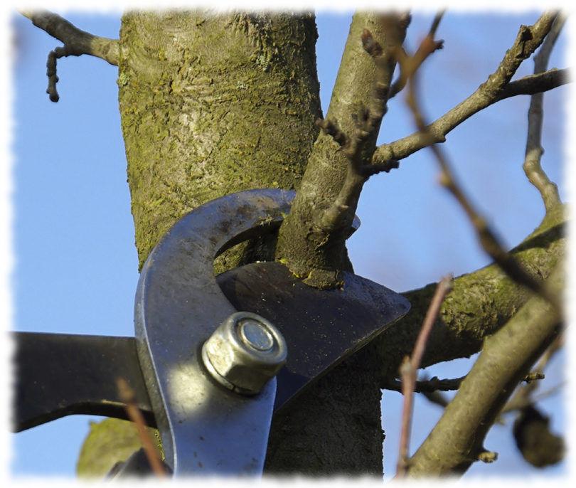 Обрезка плодовых деревьев в Апреле