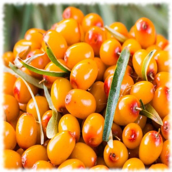 Созревшие плоды облепихи