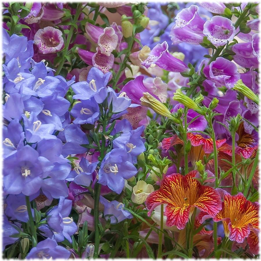 Колокольчики в саду в стиле кантри