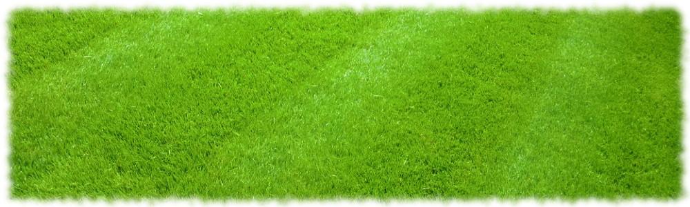 Хорошо уложенный газон