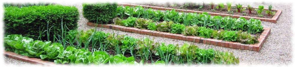 Современный сад и огород